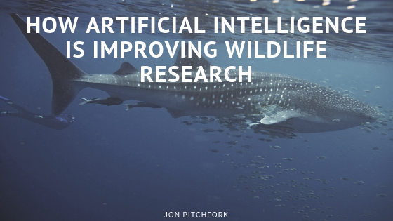 How Artificial Intelligence is Improving Wildlife Research